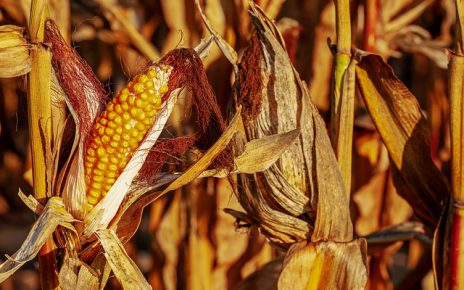 Jakie działanie mają poszczególne rodzaje herbicydów?