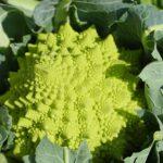 Pieczony kalafior, kapusta i brokuł, czyli najmodniejsze diety
